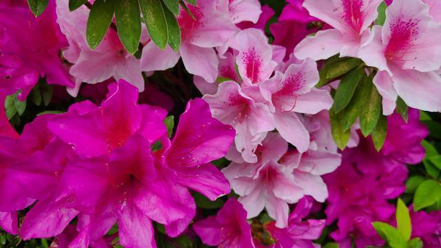 画像2: 街は春の花であふれてる!