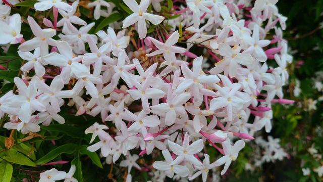画像4: 街は春の花であふれてる!