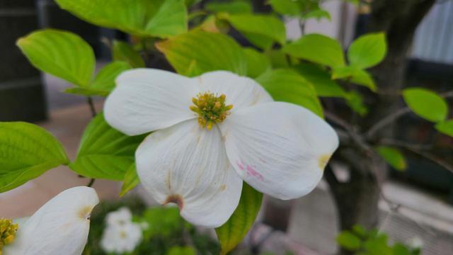 画像5: 街は春の花であふれてる!