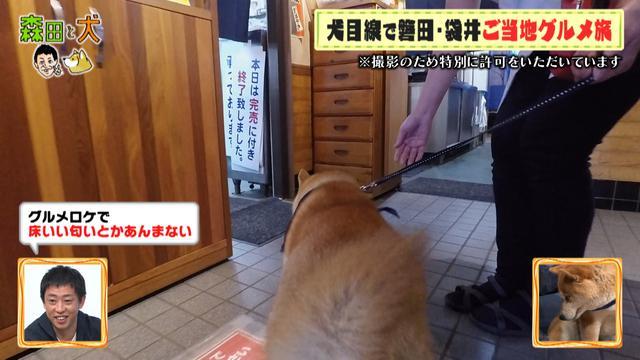 画像5: 旅ロケに出かけるのは、さらば青春の光・森田ではなく…柴犬?