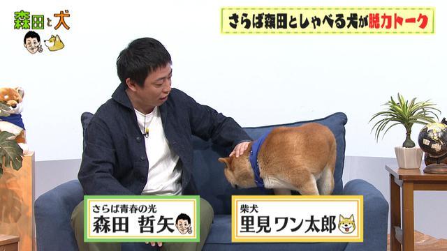 画像1: 旅ロケに出かけるのは、さらば青春の光・森田ではなく…柴犬?