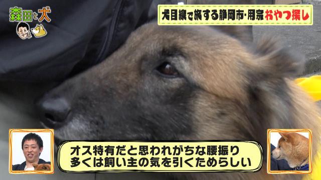 画像3: ◆タービュレンのイヌ瀬幸子のおやつ探しの旅