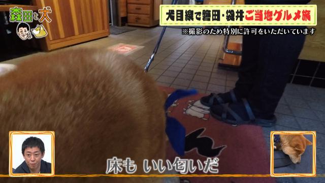 画像4: 旅ロケに出かけるのは、さらば青春の光・森田ではなく…柴犬?