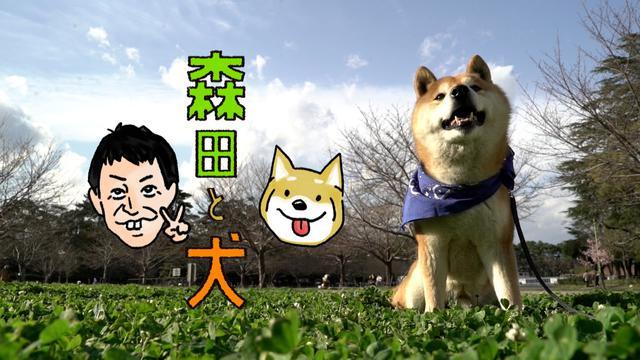 画像1: ついに完結、さらば青春の光・森田と犬が行く、笑いと癒しの旅