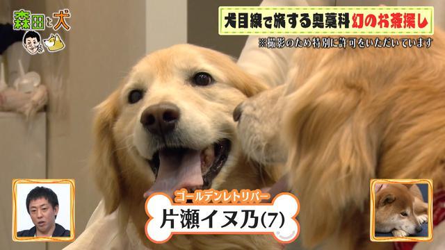 画像2: ついに完結、さらば青春の光・森田と犬が行く、笑いと癒しの旅