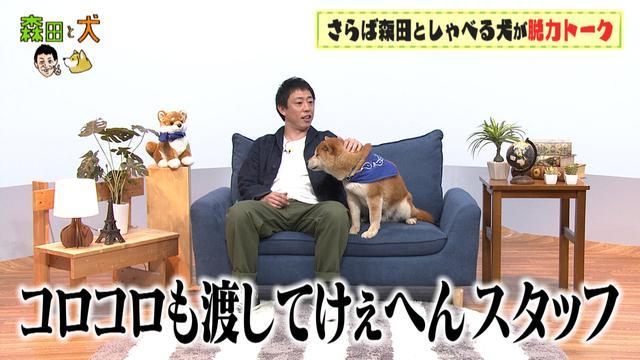 画像: 犬がメスでも腰振りをする理由とは?