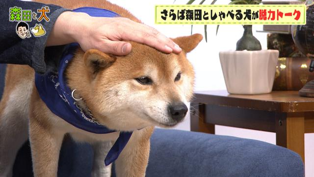 画像2: 旅ロケに出かけるのは、さらば青春の光・森田ではなく…柴犬?