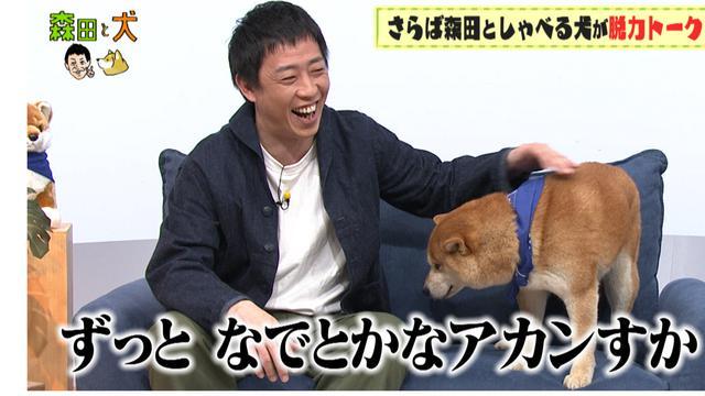 画像3: 旅ロケに出かけるのは、さらば青春の光・森田ではなく…柴犬?