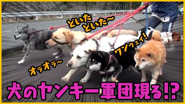 画像: 【森田と犬】さらば青春の光・森田と柴犬が送る「笑いあり、癒しあり」の超脱力系バラエティ!第四弾 – LOOK動画