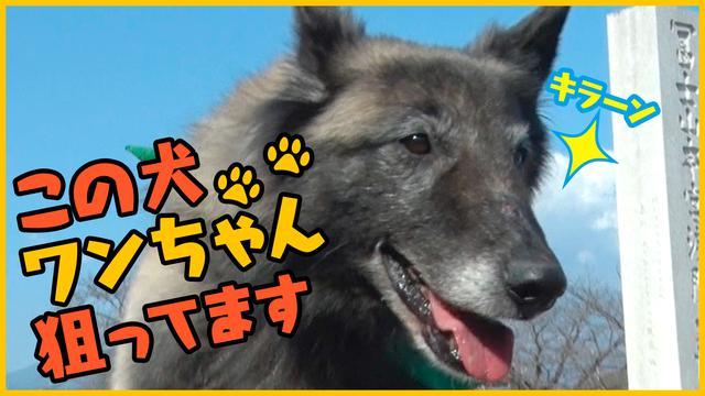 画像: 【森田と犬】さらば青春の光・森田と柴犬が送る「笑いあり、癒しあり」の超脱力系バラエティ!第二弾 – LOOK動画
