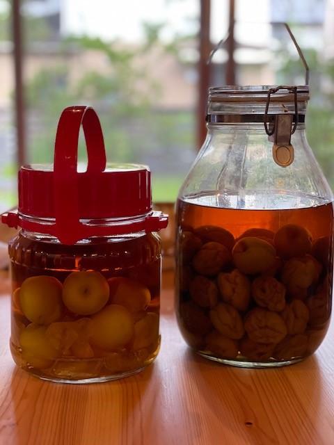 画像: 左:今回漬けたブランデー梅酒、右:一昨年漬けた焼酎の梅酒
