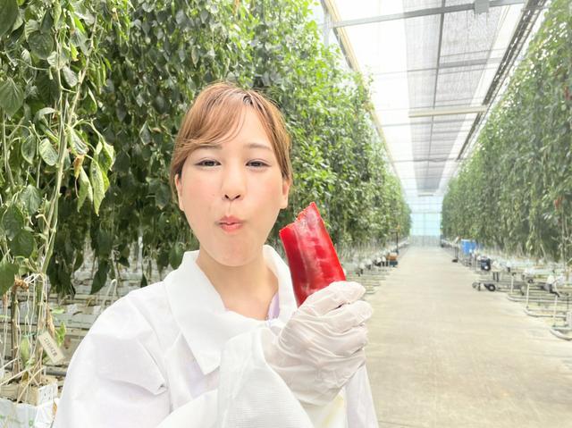 画像: こちら、パプリカ様です。極甘っ!木の大きさよ。 国内産・県内産が増えると嬉しいな。さまざまに近未来的。