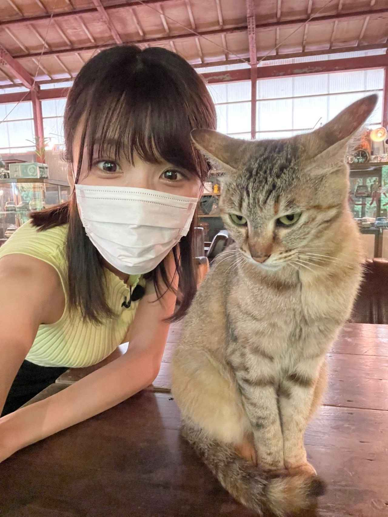 画像: 可愛すぎる猫ちゃんがいました♡