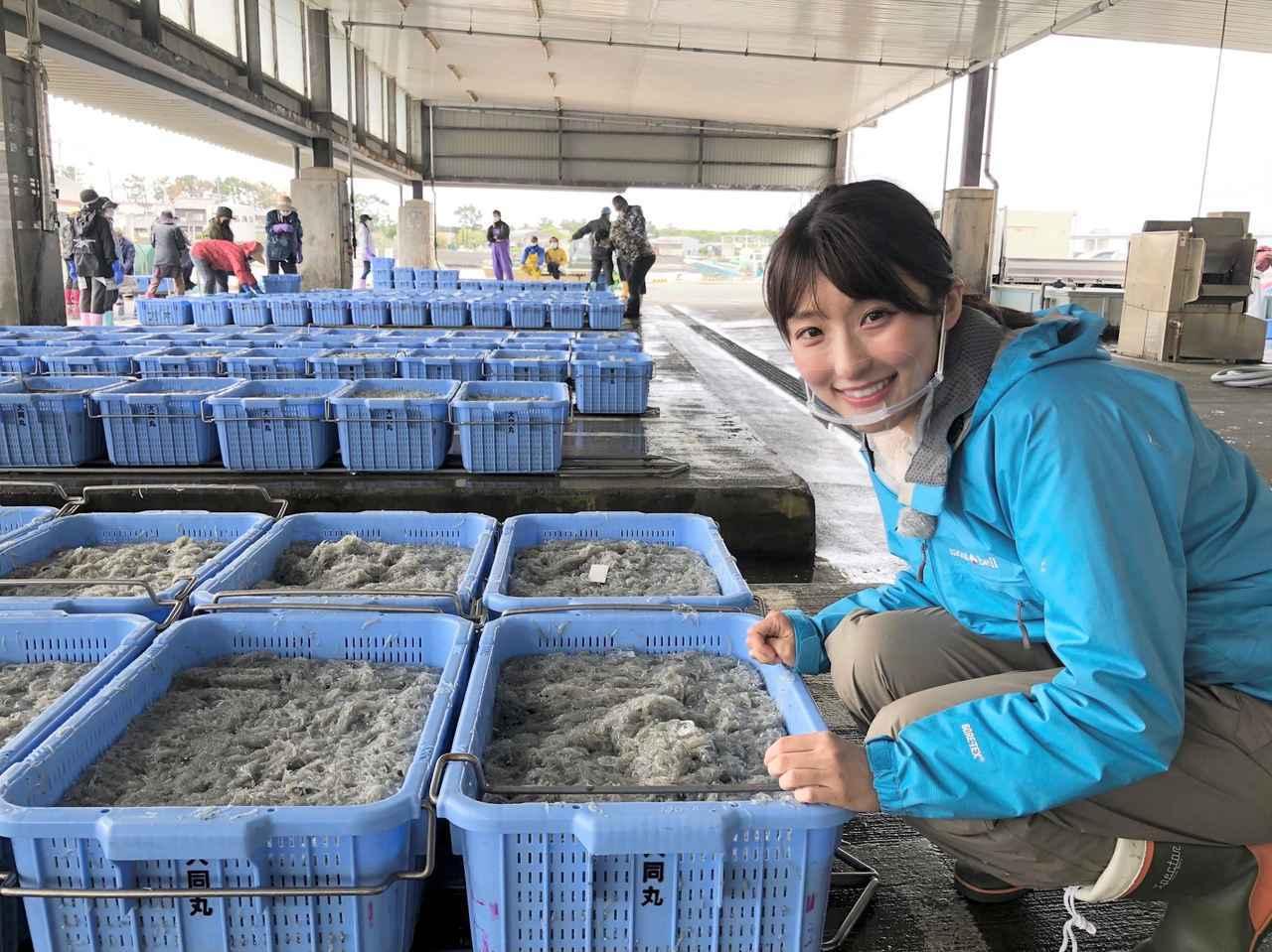 画像: 舞阪のしらす漁に行ったり・・・