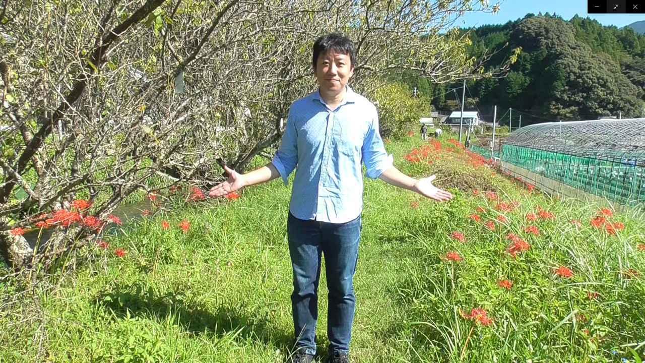 画像1: お彼岸の花といえばヒガンバナ