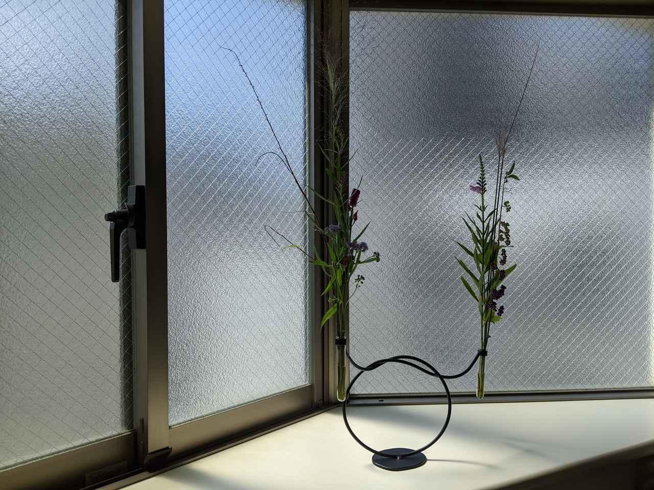 画像: 秋の野の花?のびのび