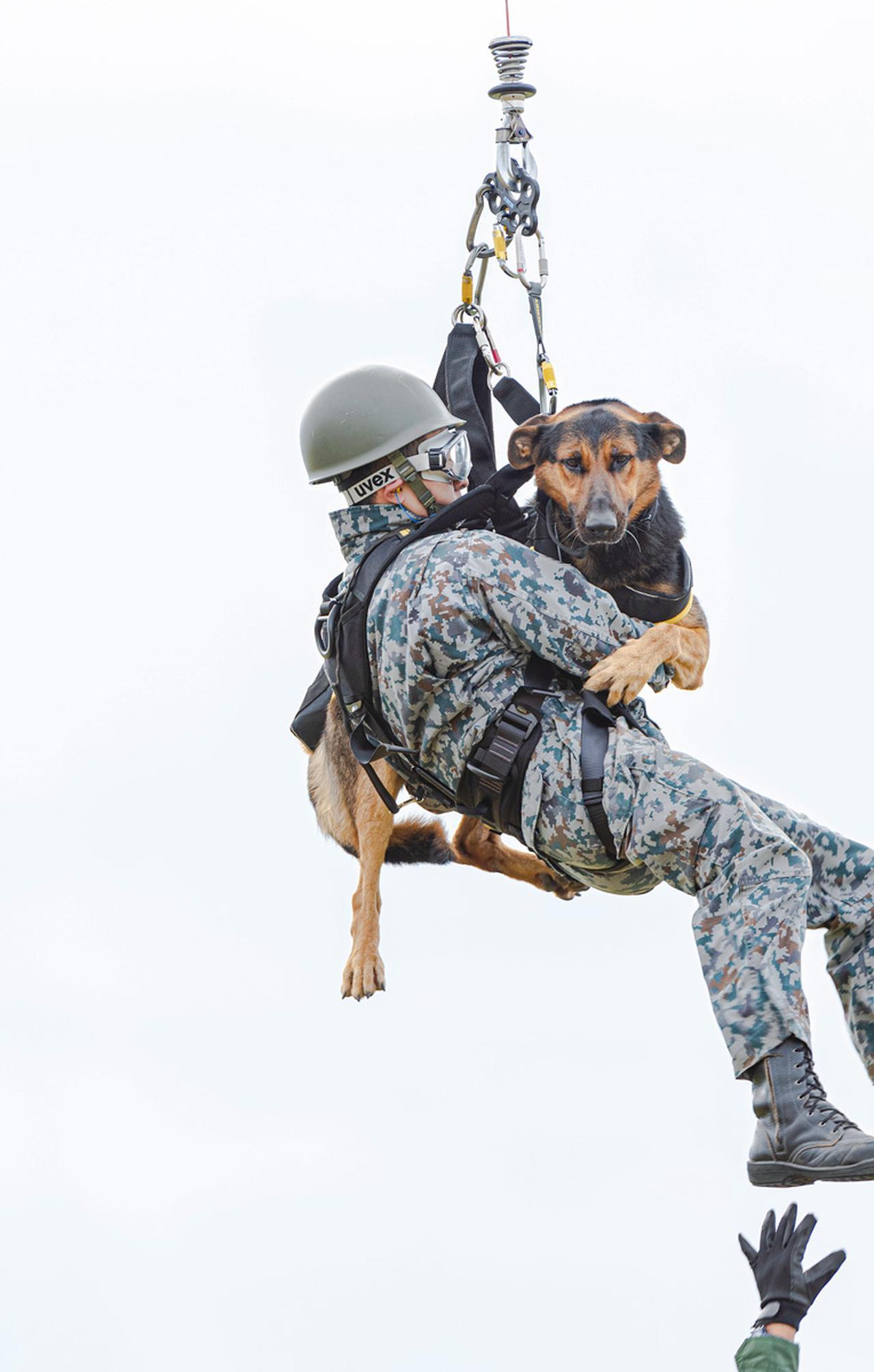 画像: 迅速な救助のため、犬と動作指示を出す隊員はハーネスで結ばれた状態で地上約15メートルから降下する(撮影/荒井健)