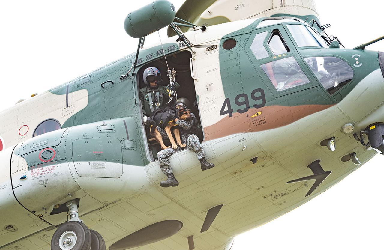 画像: 交通を断たれた災害現場に、早く確実に警備犬を派遣することを目的に、自衛隊初となるホイスト訓練が行われた。約15メートルの高さでホバリング(空中停止)するCH-47J輸送ヘリコプターの扉からハンドラーとともに警備犬が降りようとしている。