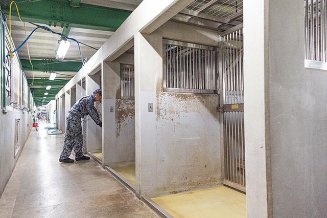 画像: 警備犬の犬舎。1日3回清掃を行い、清潔に保たれている