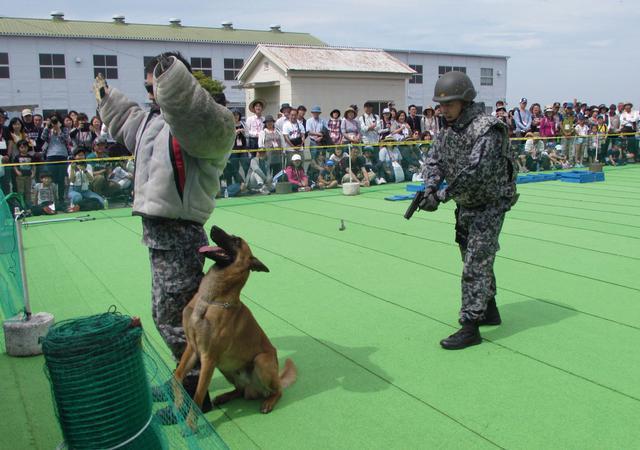 画像: 入間基地航空祭(20年は中止)での警備犬のデモンストレーション。大勢の観衆の前で、訓練の成果を披露する警備犬はどこか誇らしげだ
