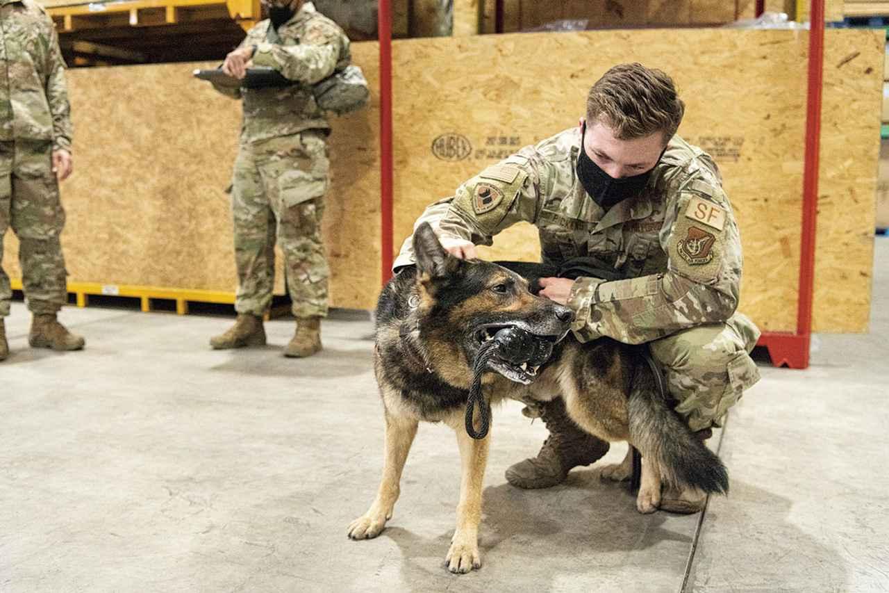 画像: 訓練では、犬が課題を1つクリアするたびに、ハンドラーはボールなどを用いて犬と遊ぶ。遊ぶことがごほうびとなり、犬は、より難易度の高い訓練をこなしていくことができるのだ