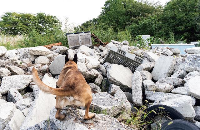 画像: 災害現場を模したがれきの中から行方不明者を捜索する訓練を行うダンテ号