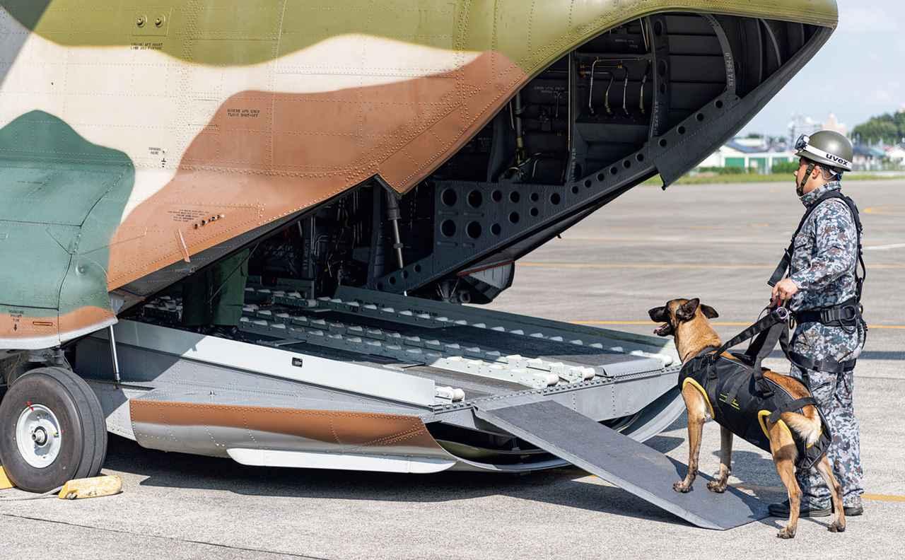 画像: ホイスト訓練の当日、CH-47Jに乗り込む、ハンドラーの高原3曹と警備犬のダンテ号。設置されたスロープに、警備犬のストレス軽減を考慮した、ヘリコプター空輸隊からの心配りが感じられる
