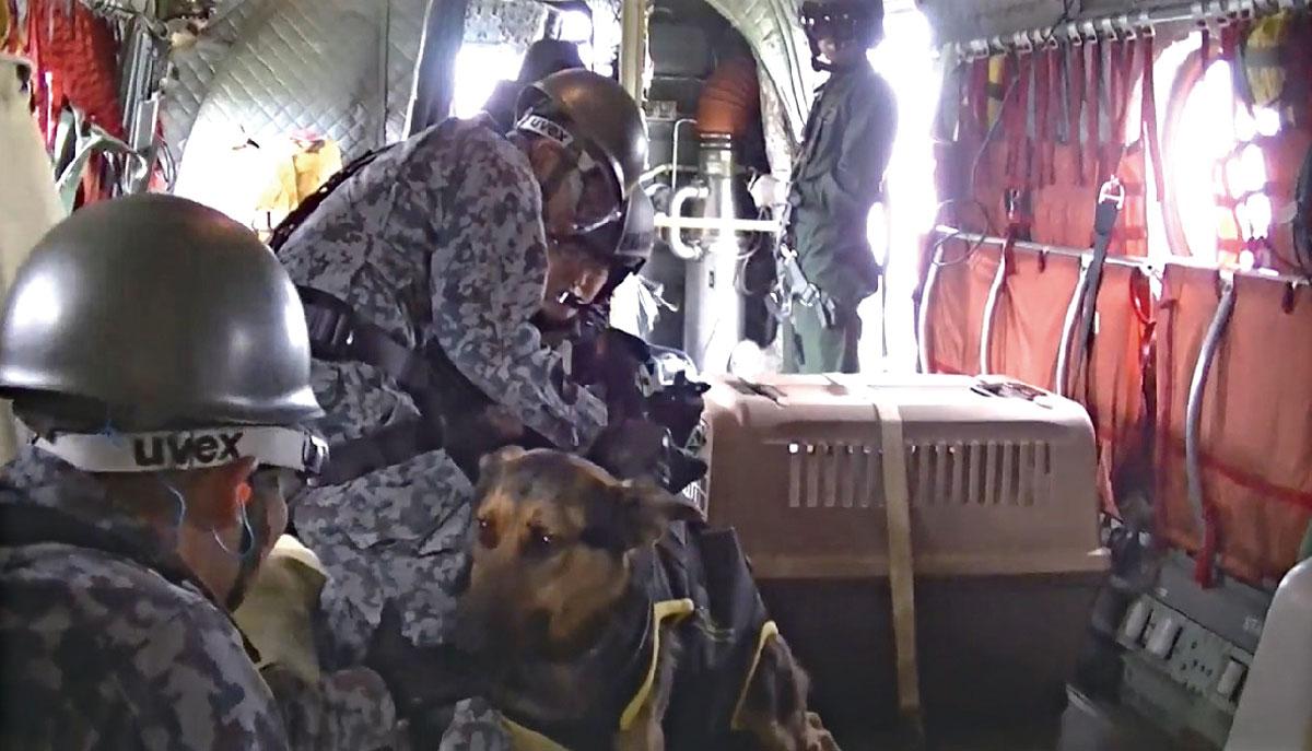 画像: 機内に設置されたケージ。向きや位置、扉の開閉方向に至るまで、安全に作業を進められるよう、検討が重ねられた(写真提供/防衛省)
