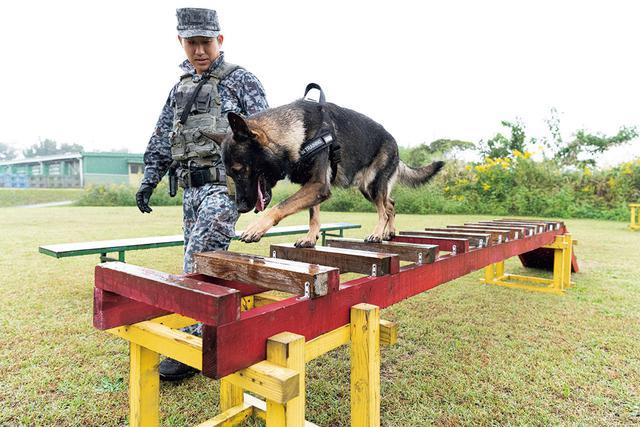 画像: 足場が狭い柵の上を渡るのは犬にとっては鬼門だが、号令とともに華麗にクリア