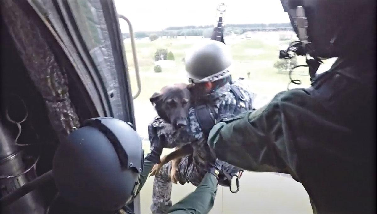 画像: ハーネスを装着した警備犬とハンドラーは、ホイスト装置のリギングプレートにカラビナで連結され、ケーブルでつり下げられる。ハンドラーが犬を抱きかかえ、空中への一歩を踏み出す、この瞬間が訓練で最も大きな難所だ(写真提供/防衛省)