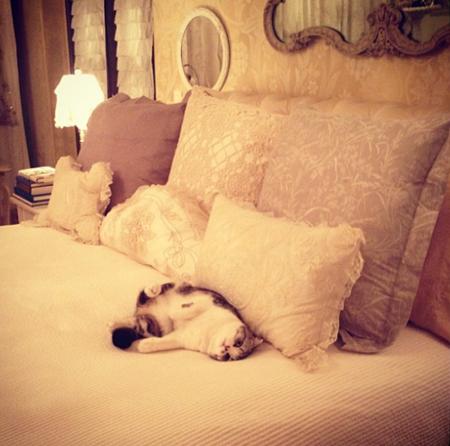 寝る前に必ず猫たちと遊ぶというテイラーのベッドルーム
