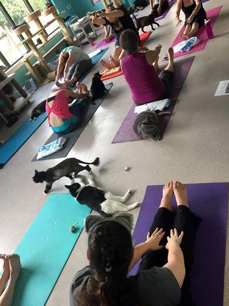 キャット・ヨガ Cat Yoga 流行