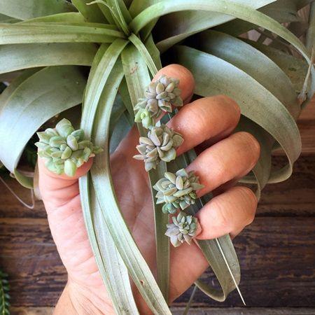多肉植物ネイル Succulent Nail ネイルアート ネイルトレンド