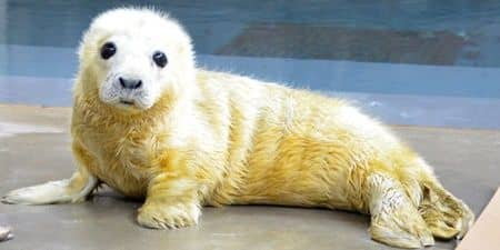 National Zoo Seal Pup 国立動物園アザラシ cuteanimaltweetoff