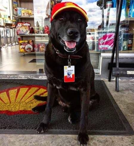 捨て犬からガソリンスタンドの店員に ブラジル ネガオくん
