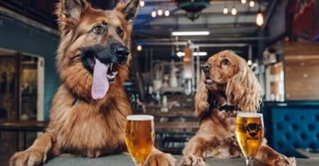 イギリスのビール会社BrewDog ペット育休を導入