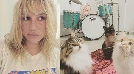 ケシャ チャーリー ミスター・ピープス ジンジャー 猫 ペット Kesha Charlie Mr.Peeps Ginger Cat