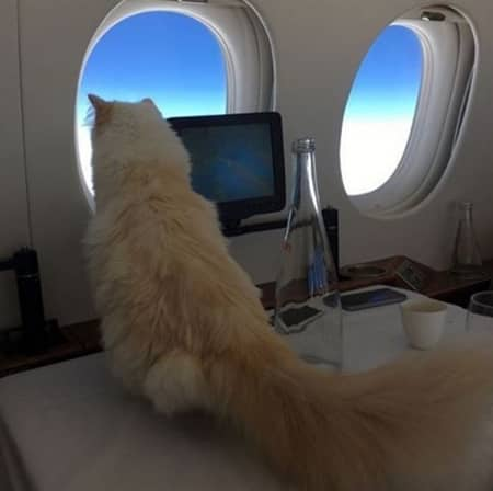 シュペット・ラガーフェルド Choupette Lagerfeld 猫 カール・ラガーフェルド シュペット・ラガーフェルド Karl Lagerfeld セレブ猫 世界一有名なネコ 秘話 自家用ジェット