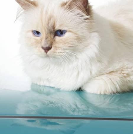 シュペット・ラガーフェルド Choupette Lagerfeld 猫 カール・ラガーフェルド シュペット・ラガーフェルド Karl Lagerfeld セレブ猫 世界一有名なネコ 秘話