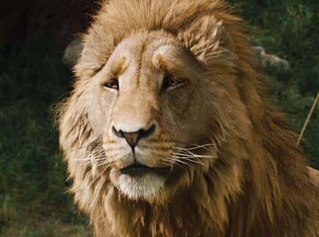 ナルニア国物語 映画 アスラン ライオン Chronicles of Narnia Movie Lion Aslan