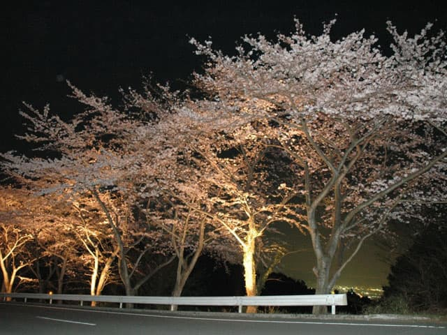 130327-桜のトンネル-01.jpg