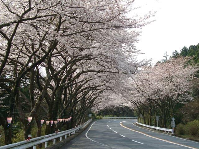 130327-桜のトンネル-02.jpg