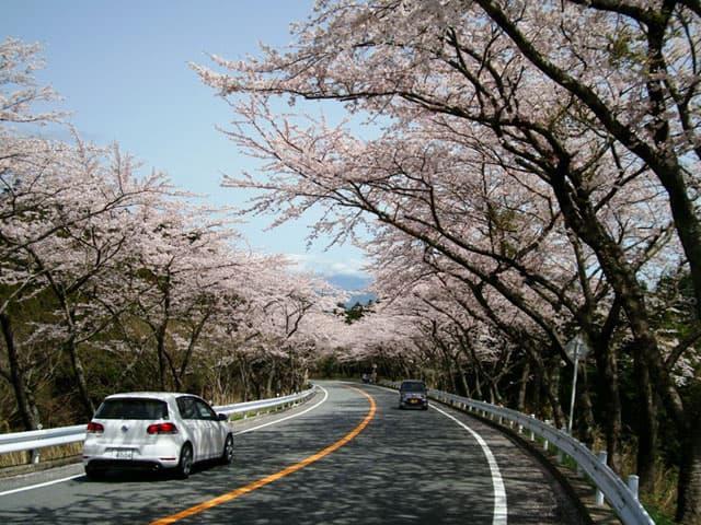 130327-桜のトンネル-03.jpg