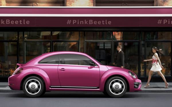 161109-PinkBeetle-02.jpg